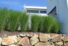 Gräser Als Sichtschutz gräser sichtschutz sichtschutz gräser sichtschutz