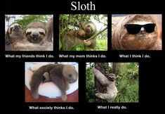 "Sloths | ""How People See Me"" According To Animals"