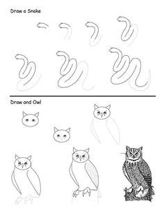 how to draw animals books and tutorials (5)