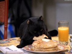 """Or if a live cat is too unruly, they can just pull the mechanical puppet that played Salem on Sabrina the Teenage Witch out of storage. 