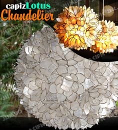 A perfect hanging Capiz Lotus Chandelier made of capiz shell in flower design can give your entire surrounding a special and very natural lightning effect. Capiz Chandelier, Flower Chandelier, Chandeliers, Flower Petals, Flowers, Lotus Flower Design, Light Decorations, Amazing Gardens, Lamp Light