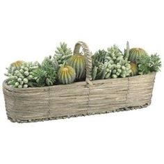 Succulent Plant in Basket by Wayfair