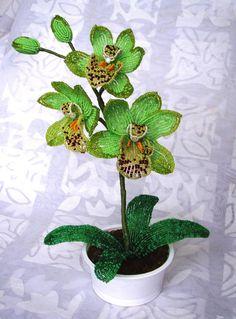 """Орхидея """"Изумрудная мечта"""""""