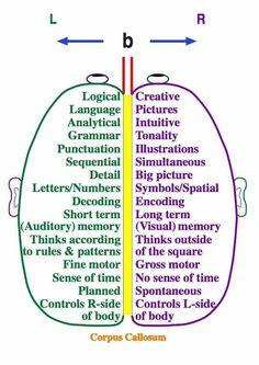Right Beain/ Left Brain