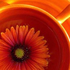 Orange by orange