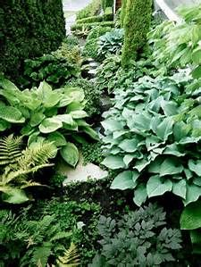 hostas - Bing images