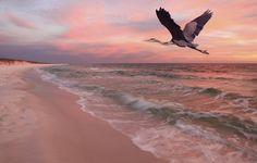 5 Steps Toward Restoring the Gulf of Mexico
