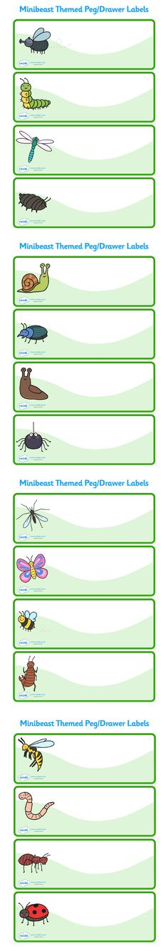 Twinkl Resources >> Editable Minibeast Themed Drawer Labels >> Thousands of printable primary teachi Class Labels, Book Labels, Name Labels, Printable Labels, Primary Teaching, Teaching Resources, Minibeasts Eyfs, Coat Pegs, Preschool Names