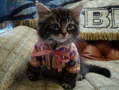 Kitten in a jumper