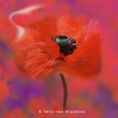 Summer in Red by Krystyna Wigurska on 500px
