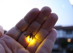 catching fireflies and placing them in a jar