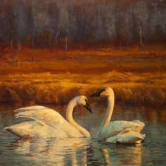 Sunset Swans by Jeanne Young