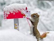 Adorable Funny Animals - - Yahoo Image Search Results