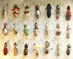 Beetle zoo by Mister Finch