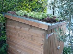 Creating Your Own Green Roof