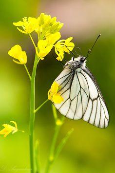 butterfly by Dinara Saynulina on 500px