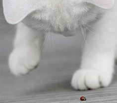 Ladybug via purrfectstitchers.tumblr