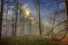 Jesień, Las, Mgła, Przebijające, Światło