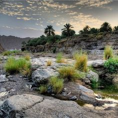 Wadi Dima, Oman وادي دماء٬ عمان by @omanitripper  www.batuta.com
