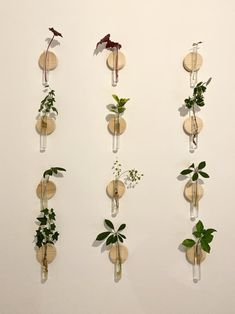 Plant Wall Diy, Plant Art, Plant Decor, Diy Wall, Room With Plants, Plant Cuttings, Bouquet, Baby Decor, Flower Wall