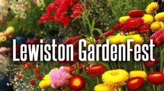 LEWISTON GARDENFEST ( June 16 & 17, 2018 )  @ Lewiston, New York. Welcome to the Lewiston GardenFest, to see beautiful open gardens. Explore the unique garden items and plants you might not find anywhere else. Educational and entertaining demonstrations...