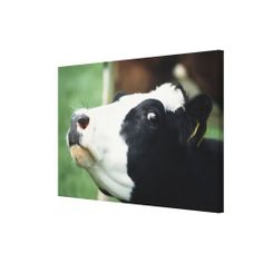 >>>Order          	cow stretched canvas print           	cow stretched canvas print you will get best price offer lowest prices or diccount couponeDiscount Deals          	cow stretched canvas print today easy to Shops & Purchase Online - transferred directly secure and trusted checkout...Cleck Hot Deals >>> http://www.zazzle.com/cow_stretched_canvas_print-192266459674833569?rf=238627982471231924&zbar=1&tc=terrest