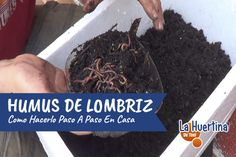 You searched for - La Huertina De Toni Compost, How To Dry Basil, Lily, Backyard, Organic, Beef, Plants, Food, Gardening