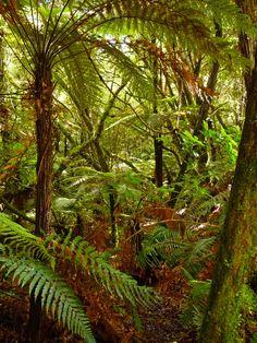 imagini din jungla - Căutare Google Google, Flowers, Plants, Pictures, Plant, Royal Icing Flowers, Flower, Florals, Floral