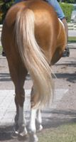 """THE BEST HORSE CARE/GROOMING/BRAIDING TIPS EVER! By the lady who owns """"Lucky Braids"""" and runs Shiny Happy Horses on Facebook. Seriously, these are all game changers for you and your horse."""