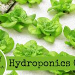 (adsbygoogle = window.adsbygoogle || []).push({});     Today I am thrilled to have Chris Wimmer of Captain Hydroponics guest posting for me today! Chris is a urban homesteader who uses hydroponics to make the best use out of his small spaces. I think you'll enjoy learning from his post as much as I have! This is my homestead and it provides me exactly 440 square feet of outdoor space. I truly feel blessed to have that much space as I live in downtown Chicago. However, it's also a major ...