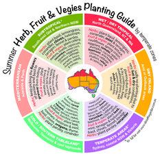 When to harvest herbs, fruits, veggies in Australia!
