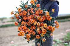 Nejprodávanější oranžový plnokvětý tulipán v naší nabídce. Odstíny oranžové, žluté, zelené a lehký náznak vínového žebrování. Dorůstá výšky 25-30 cm, proto je vhodný i pro výsadbu do nádob, stejně tak i do kytice. Pumpkin, Outdoor, Outdoors, Pumpkins, Outdoor Games, Squash, The Great Outdoors
