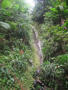 The Source - Nestled in the thick forest on the Island of Nevis, this beautiful 5 mile hike takes you to an 80 foot ladder that leads to the main water source for the Island and a beautiful view.
