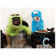 """OTG:""""Scram!"""".... CM:""""cookieeeees!"""", Sophia and Tank, Fabulous French Bulldogs in Oscar the Grouch, and Cookie Monster Costumes."""