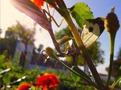 Pinceladas de Otoño... #Mantis #desayuno #Divino