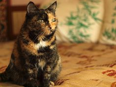 How to Take Care of a Pregnant Cat: 5 Steps (with Pictures)
