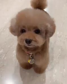cute teacup puppies now if the puppy had waves Baby Animals Super Cute, Cute Baby Dogs, Cute Little Puppies, Cute Funny Dogs, Cute Dogs And Puppies, Cute Little Animals, Cute Funny Animals, Cute Cats, Tiny Puppies