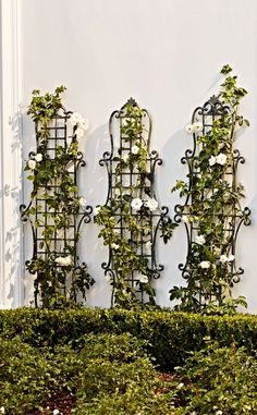 Accent garden areas and plants with the lattice framework and delicate scrolling of our Florentine Wall Trellis. Statues, Front Flower Beds, Wall Trellis, Small Yard Landscaping, Flowering Vines, Climbing Roses, Exotic Plants, Plant Design, Landscape Design