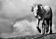 beautiful-horses