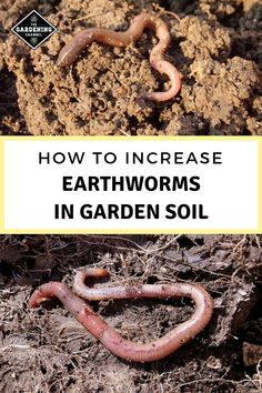 these gardening tips to create soil earthworms will love. Learn the benefits earthworms bring to the garden soil. Organic Soil, Organic Gardening Tips, Indoor Gardening, Vegetable Gardening, Fairy Gardening, Succulent Gardening, Gardening Hacks, Flower Gardening, Garden Pests