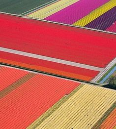 Aerial of tulip fields in Holland_2