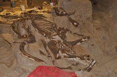 Mammoth Site , in Hot Springs, South Dakota  !!!