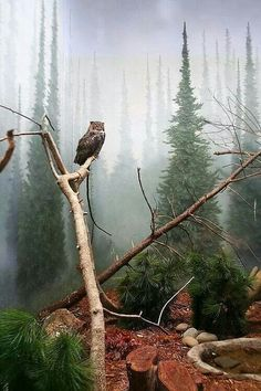 Guardian of the mist ...