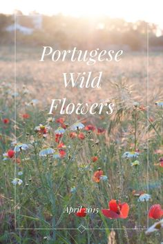April 2015 Portugese Wild Flowers Whilst on holiday in Portugal I spotted a patch of flowers flowers by the side of the road. I managed to come back with my camera one evening just as the sun was sinking and witnessed a wonderful transformation of the grasses and