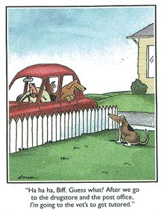 Oh, this poor misguided dog!