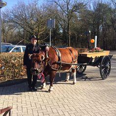 Kist op een paard met wagen