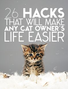 26 Hacks That Will Make Any Cat Owner's Life Easier - some really good ideas to make life easier for both the cat and the family that is lucky enough to be owned by them! :D