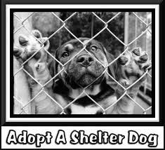 Adopt a shelter dog !!