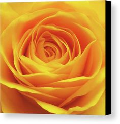 Brighten up your home with a yellow rose! Photo by Johanna Hurmerinta