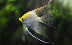 Beautiful-Fish-HD-Wallpapers.jpg (1920×1200)